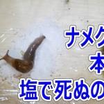 【閲覧注意】ナメクジは塩で本当に死ぬのか?【あやしい栽培 第11回】