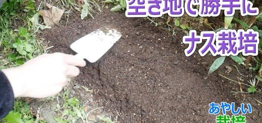マンションの空地で勝手に野菜を栽培 ナス part1【あやしい栽培 第13回】